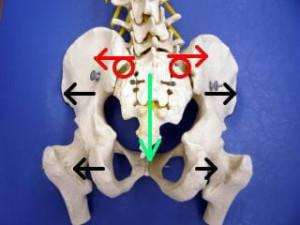 産後の骨盤3